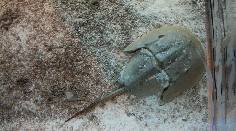 2011-point-defiance-zoo-aquarium-9