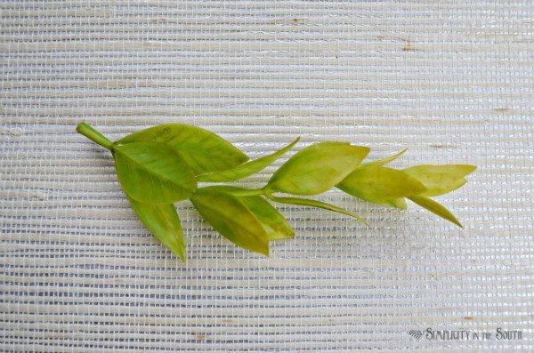 greenery sprig