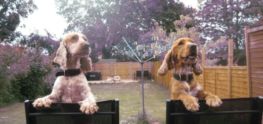 positive reinforcement training in dogs