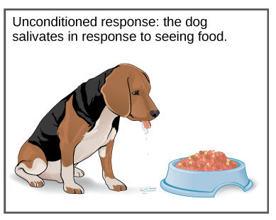 dog-salivates-food