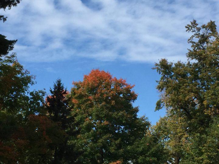 Autumn, Deerwood, Minnesota