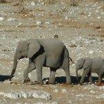Homenaje al elefante