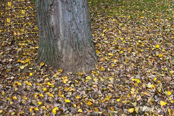 otoñocaliente00
