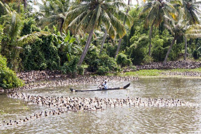 patito kerala backwaters