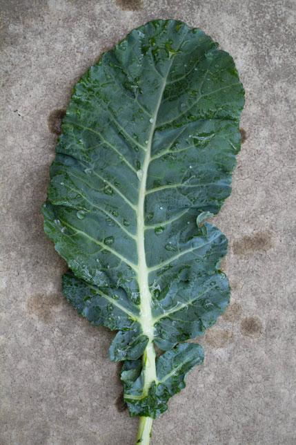 Broccoli Greens