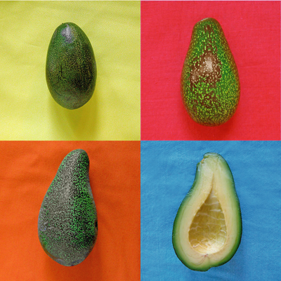 Avocados from Sippity Sup