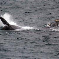 Buscando a las ballenas embarcados desde Puerto Pirámides