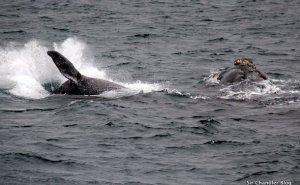 puerto-piramides-ballenas