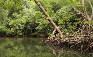parque-haitises-dominicana