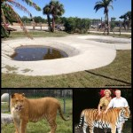 Bank's das Feras – Big Cat Habitat