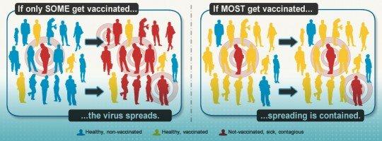 herd-immunity-graphic
