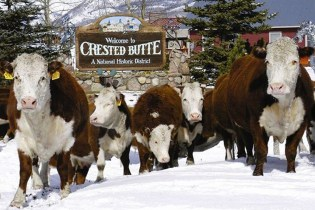 Crested Butte photo 6