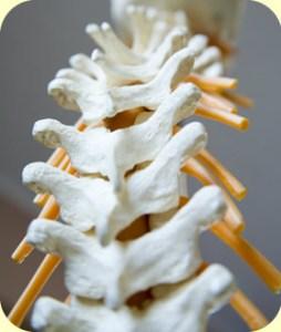 img-chiropractic
