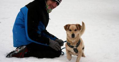 Tobi – niewysoki pan labrador