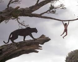Director Jon Favreau discusses Disney's 'The Jungle Book' remake