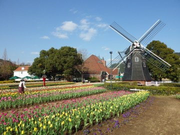Huis-Ten-Bosch-Windmill-Tulips-2-3x4-by-Joshua-Meyer