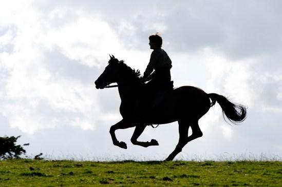 War Horse 7