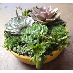 Small Crop Of Diy Gardening Containers