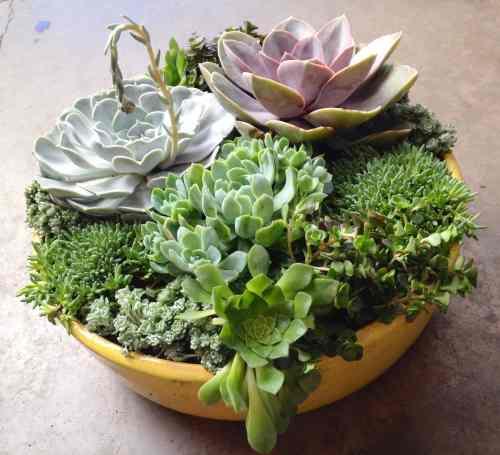 Medium Of Diy Gardening Containers