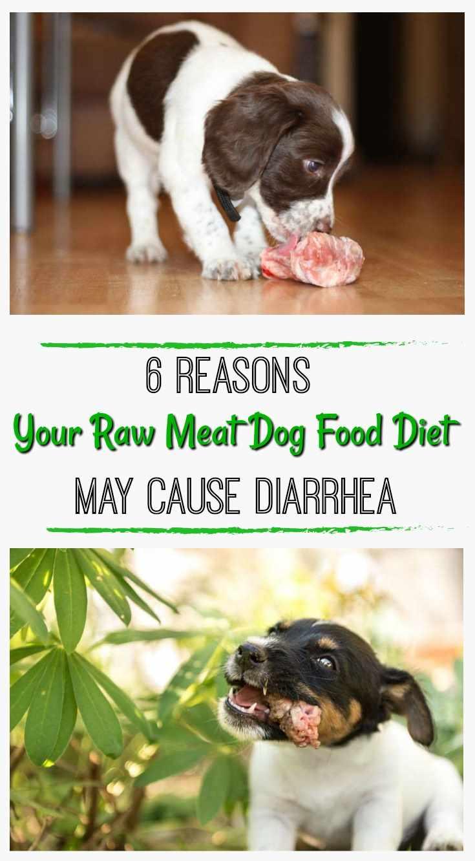 Fullsize Of Bone Meal For Dogs