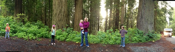 redwood panoramic