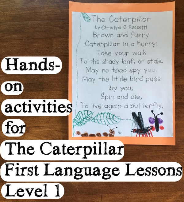 hands-on caterpillar activity