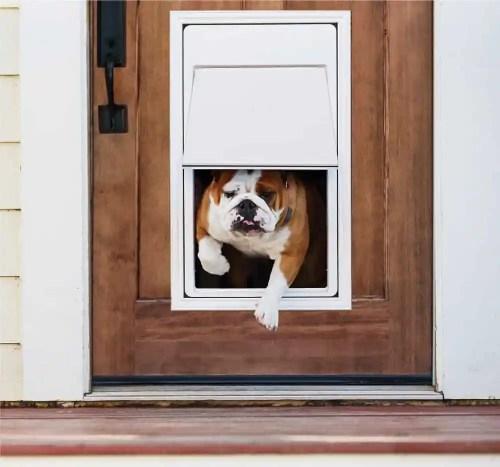 Automatic Dog Door In Swish Plastic Pet Doors Shop Doors Products By