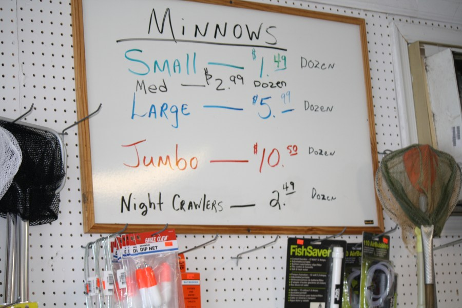 Live Minnows available