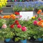 spring_planter_diy3