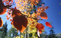 Autumn colors begin appearing by late September in the Tahoe Basin