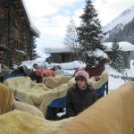 Sleigh with blankets and sheepskin throws