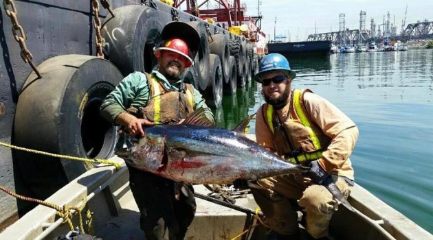 A Little Bit About That L.A. Harbor Tuna