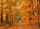 Efteråret byder traditionelt på store stigninger i guld og sølv