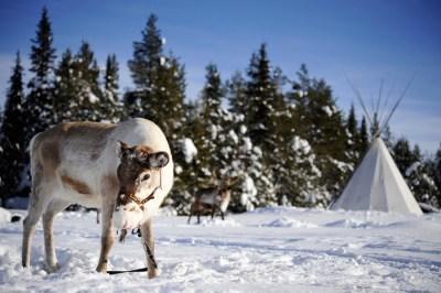 Ren och skidor - Solberget