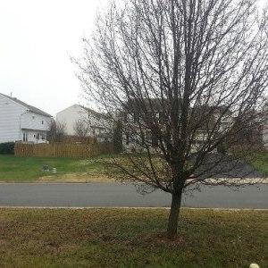 Snow in Woodbridge Virginia for Christmas, White Christmas in Woodbridge