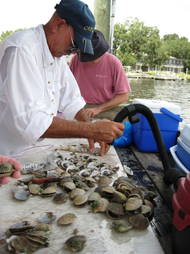 Yes, the Guide is Using a Shop-Vac to Clean the Scallops, Crystal River, Fla.