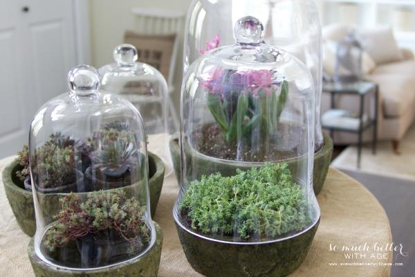Terrarium plants for spring | somuchbetterwithage.com