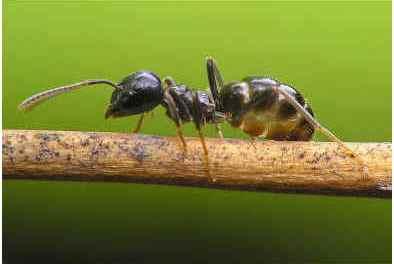 do-ants-eat-termites