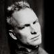 Sting prepara musical