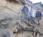 Niño ruso de 11 años encuentra mamut casi intacto de hace 30 mil años