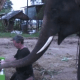 Conoce a... ¡un elefante que toca el piano!