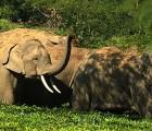 50 elefantes borrachos destruyen una localidad en la India