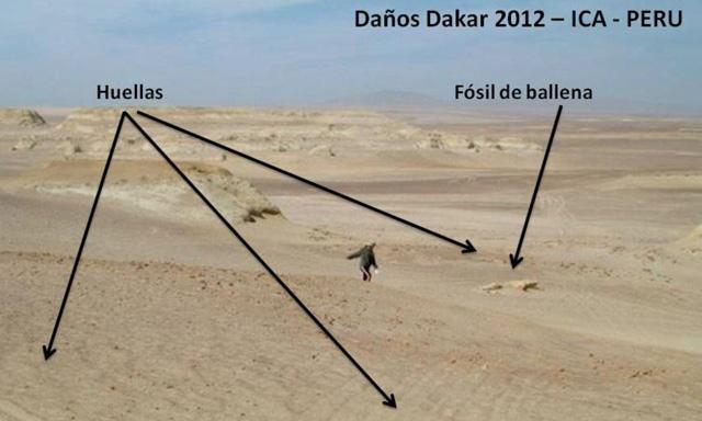 fosiles_dakar_peru_5