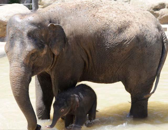 mama_hijo_elefantes_2