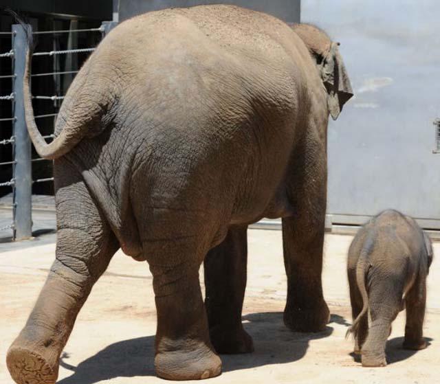 mama_hijo_elefantes_5