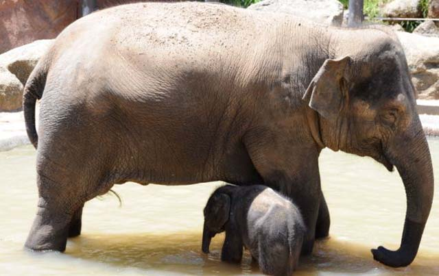 mama_hijo_elefantes_8