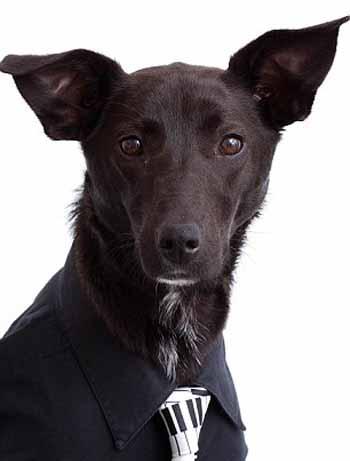 perros_camisas_10
