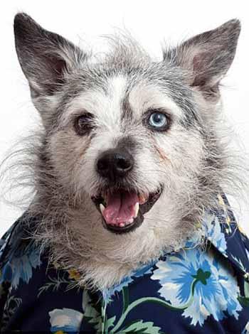 perros_camisas_7