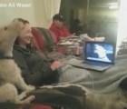 Dos perros hablan ¿¡por Skype!?