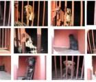"""""""Exonerados"""" los 25 perros capturados en el Cerro de la Estrella"""
